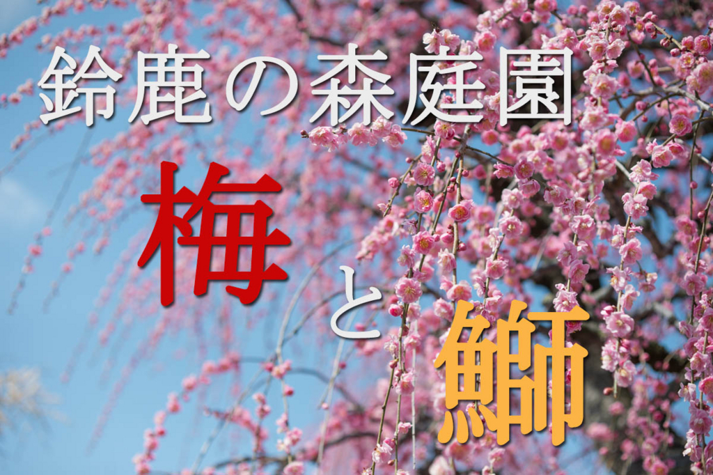 f:id:shiitakeoishi:20180318193859j:plain