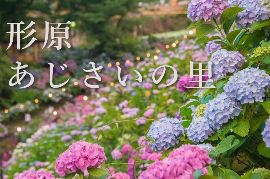 f:id:shiitakeoishi:20180707160032j:plain