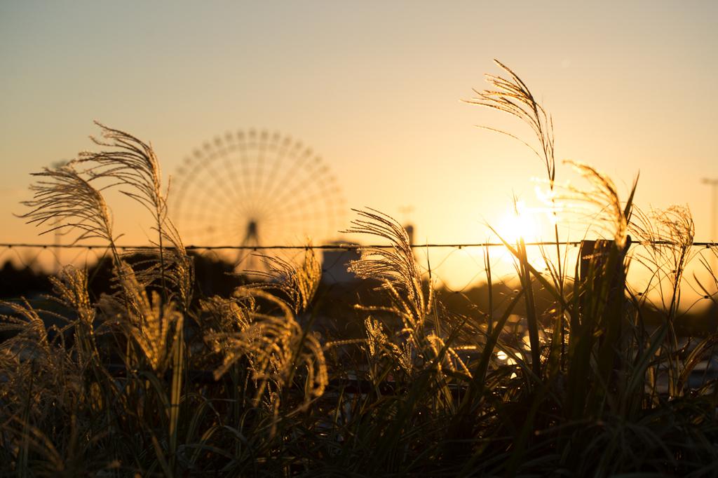 f:id:shiitakeoishi:20181008230008j:plain