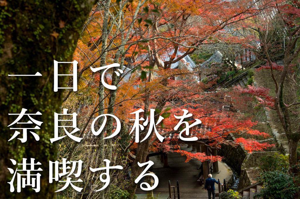 f:id:shiitakeoishi:20181203010712j:plain