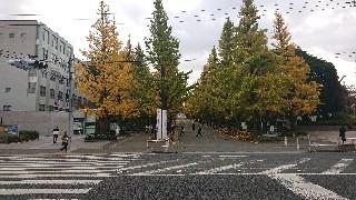 f:id:shikakudodesyo:20191201101356j:image