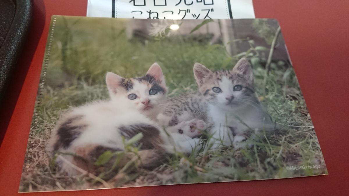 f:id:shikakudodesyo:20200226110516j:plain