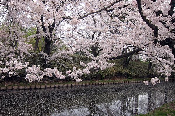f:id:shikanai:20180424093038j:image