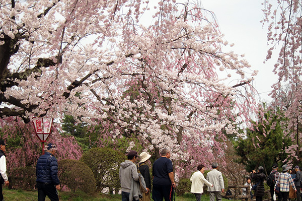 f:id:shikanai:20180424093046j:image
