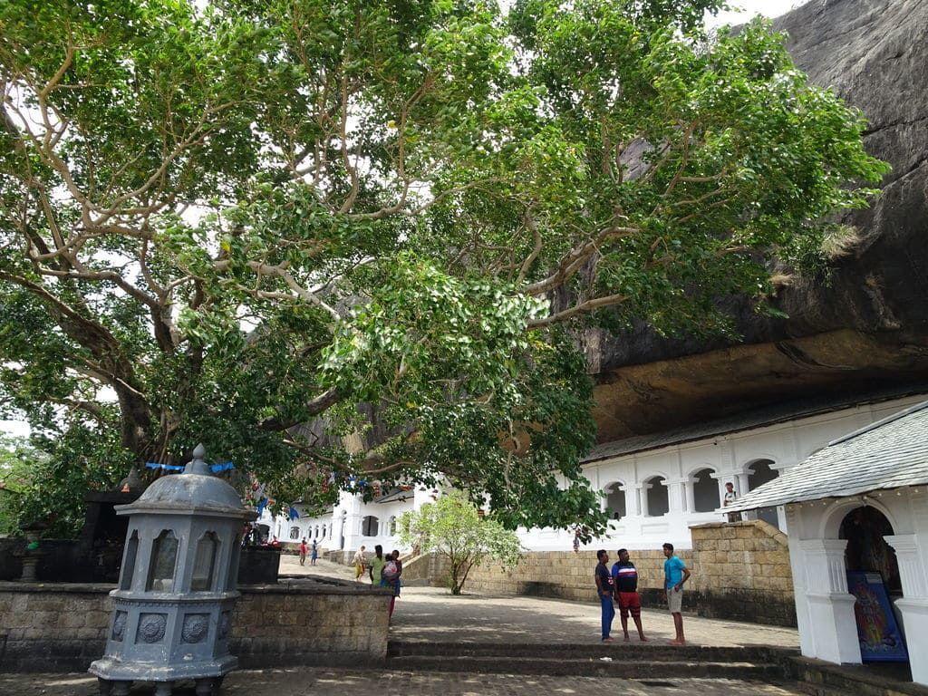 ダンブッラ石窟寺院の菩提樹