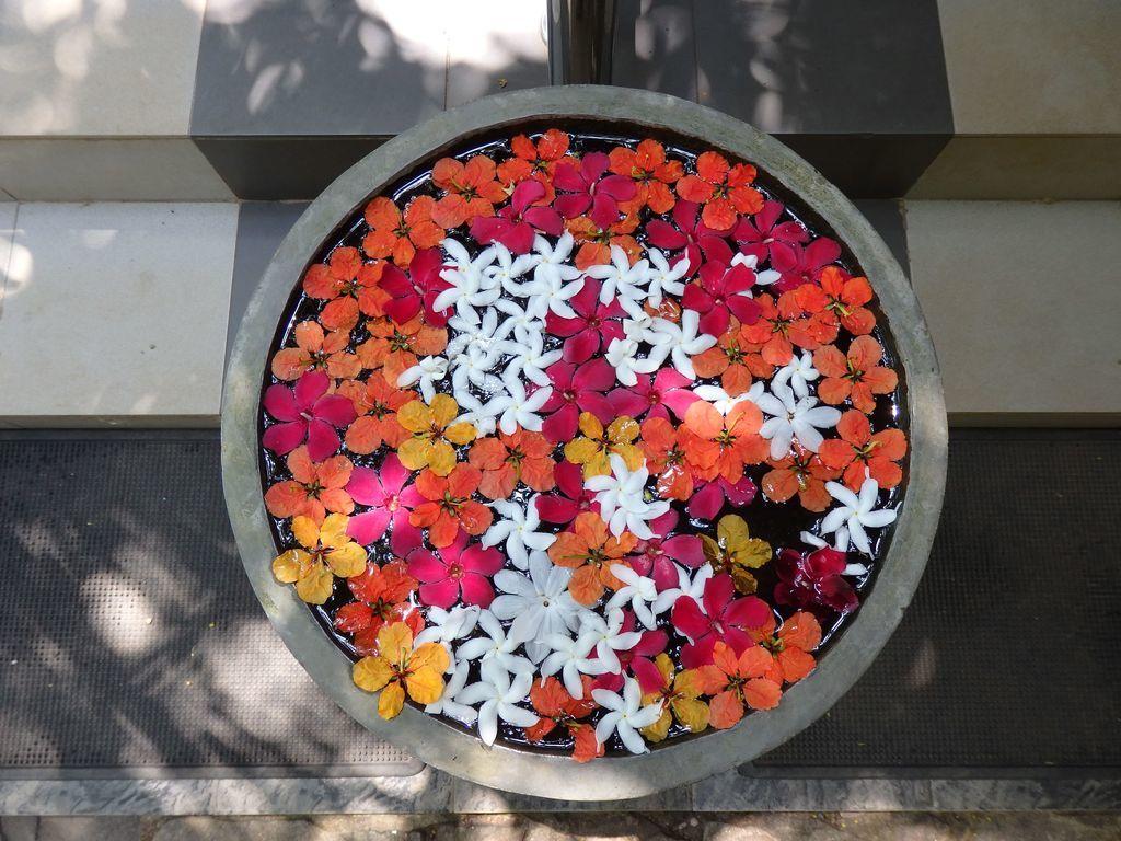 スパイスガーデン スリランカ 浮き花