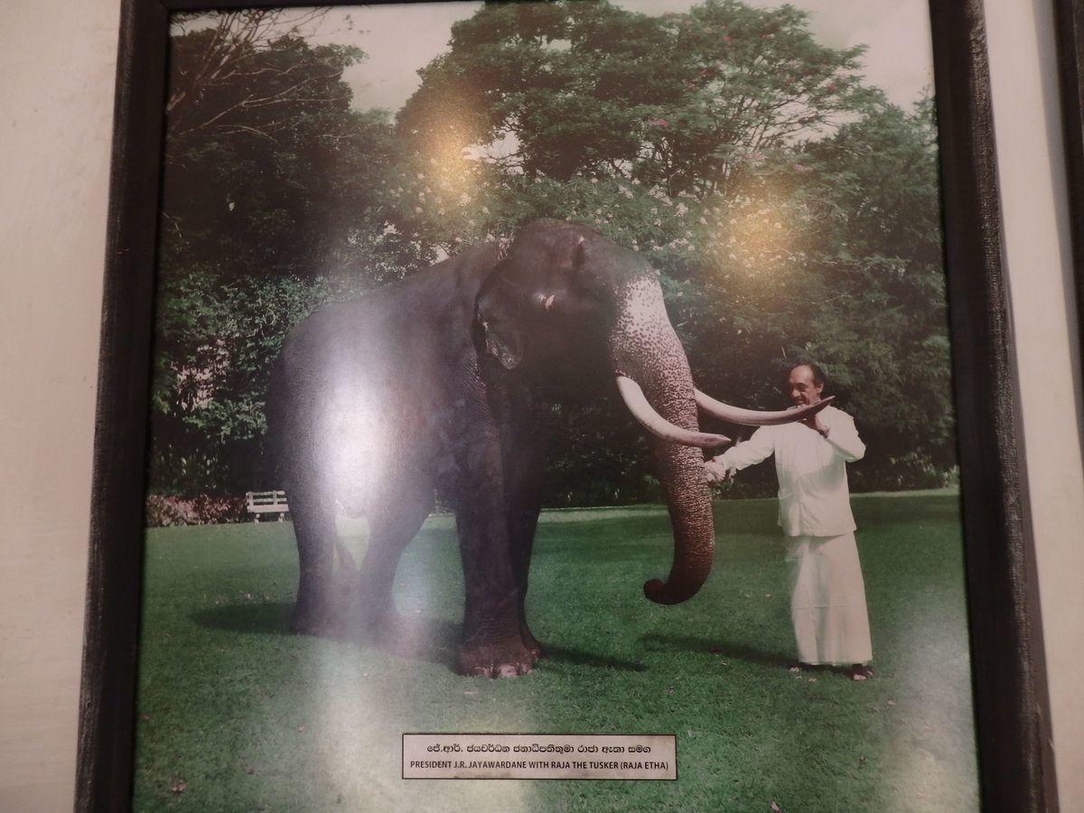 仏歯寺 当時の大統領ジャヤワルダナ氏とペラヘラ祭の仏歯をのせた先代のゾウ