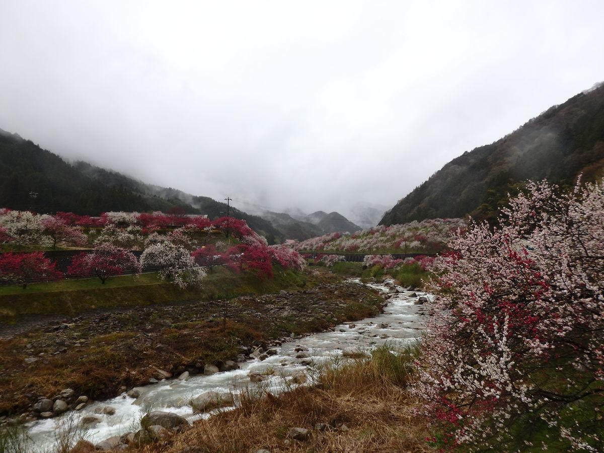 阿智村月川温泉郷花桃まつり