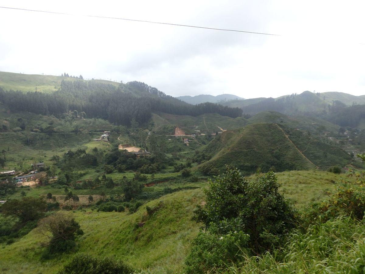 スリランカ キャンディとヌワラ・エリヤを結ぶ高原列車/紅茶列車 整然と整えられた紅茶畑が広がる景色