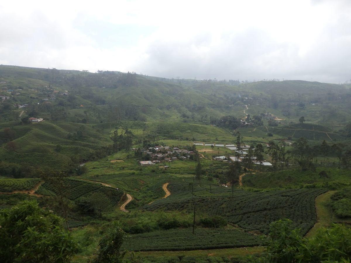 スリランカ キャンディとヌワラ・エリヤを結ぶ高原列車/紅茶列車 紅茶畑が広がる景色