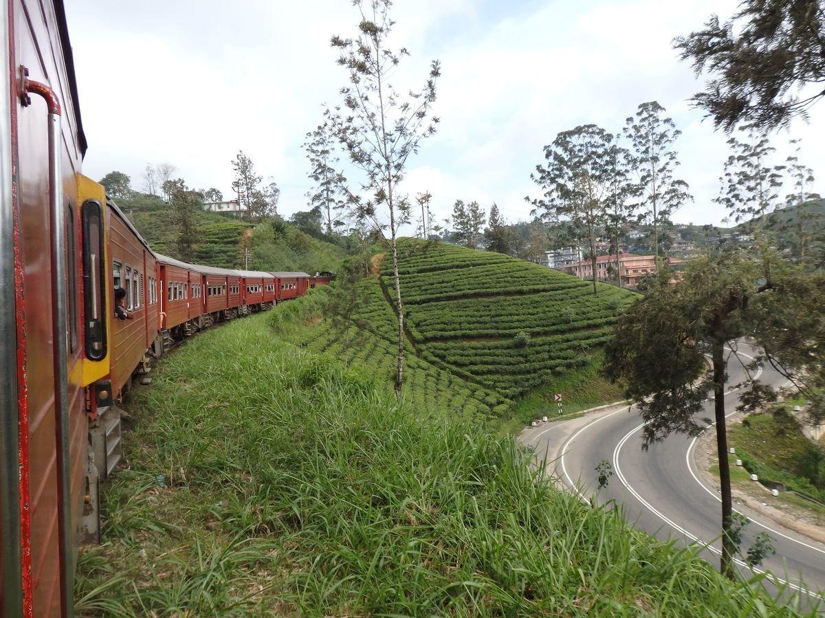 スリランカ キャンディとヌワラ・エリヤを結ぶ高原列車/紅茶列車 紅茶畑の合間を縫って走り抜ける列車