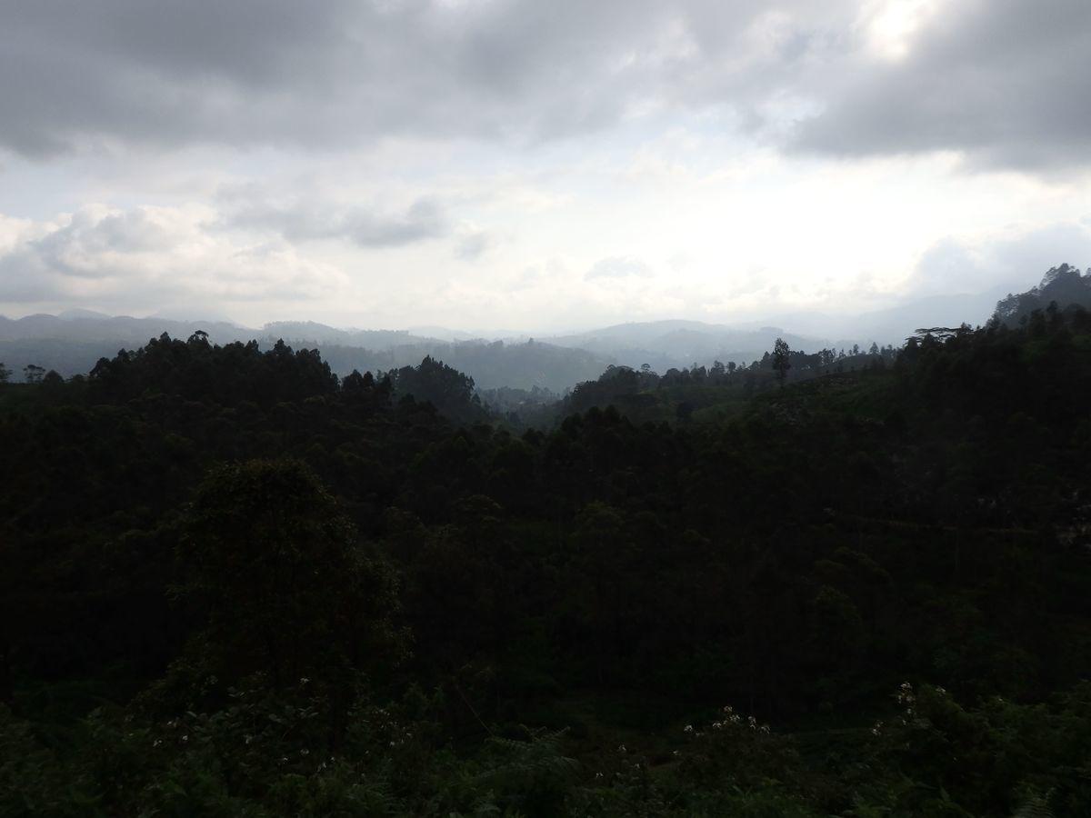 スリランカ キャンディとヌワラ・エリヤを結ぶ高原列車/紅茶列車 景色