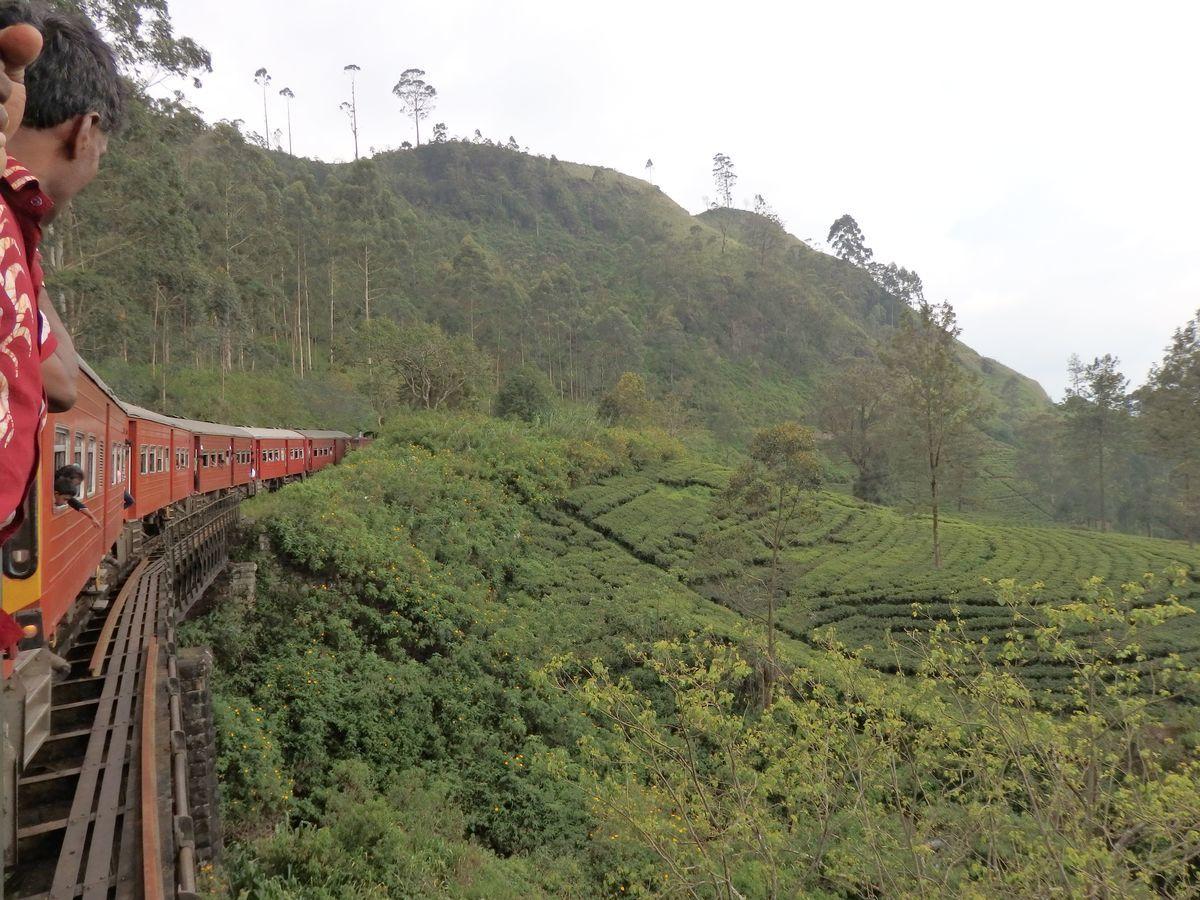 スリランカ キャンディとヌワラ・エリヤを結ぶ高原列車/紅茶列車 紅茶畑の景色。絶景。ハイライト。