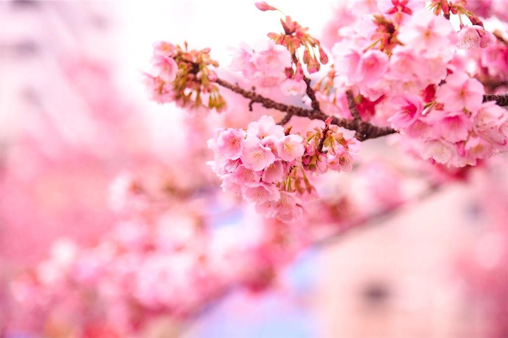 f:id:shiki-japanculture:20190219001650j:image