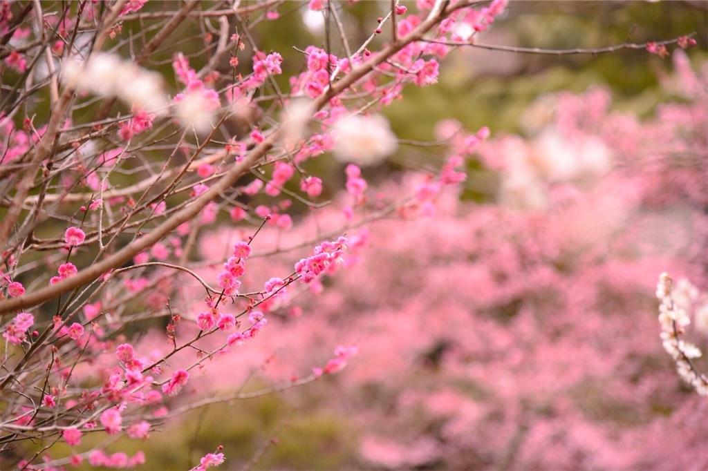 f:id:shiki-japanculture:20190220060244j:image