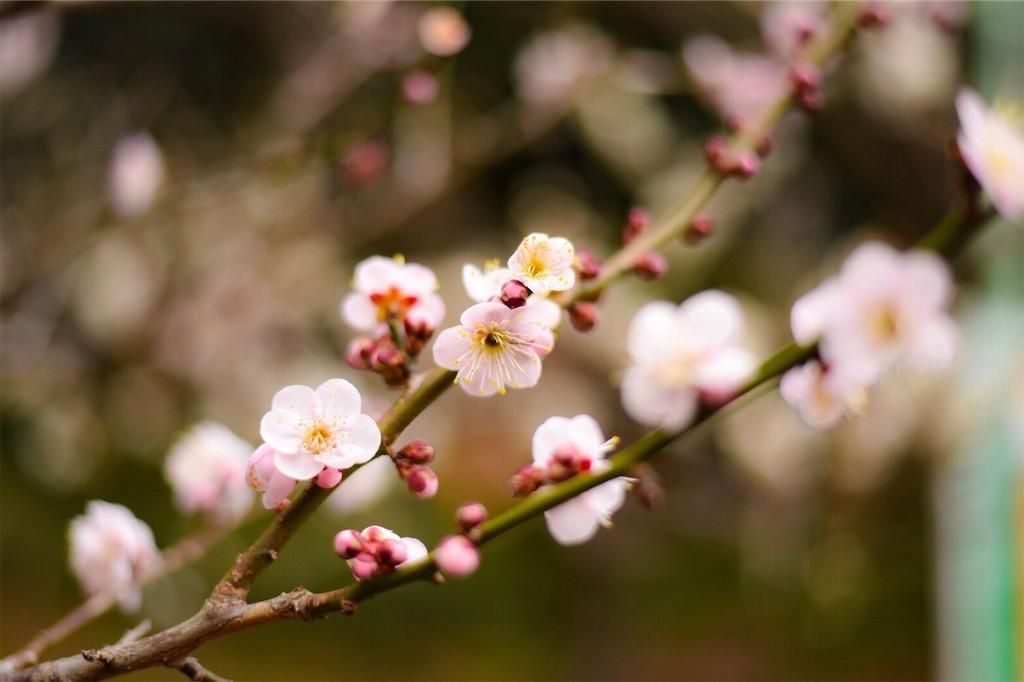 f:id:shiki-japanculture:20190220060247j:image