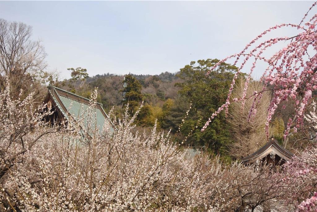 f:id:shiki-japanculture:20190225100905j:image