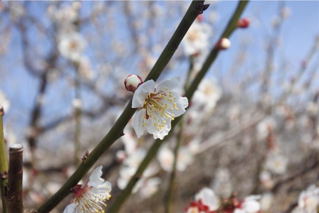 f:id:shiki-japanculture:20190226084032j:image