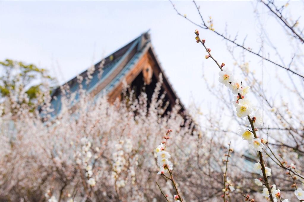 f:id:shiki-japanculture:20190227082055j:image