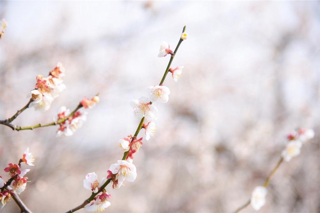 f:id:shiki-japanculture:20190227082504j:image