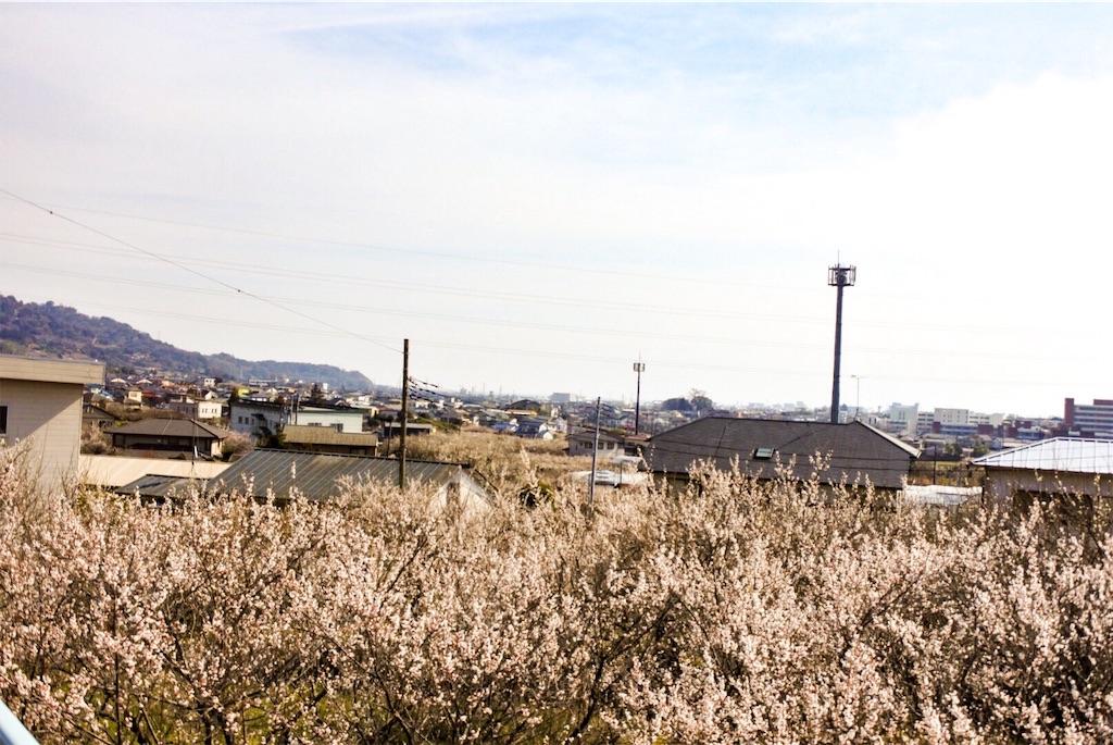 f:id:shiki-japanculture:20190227175710j:image