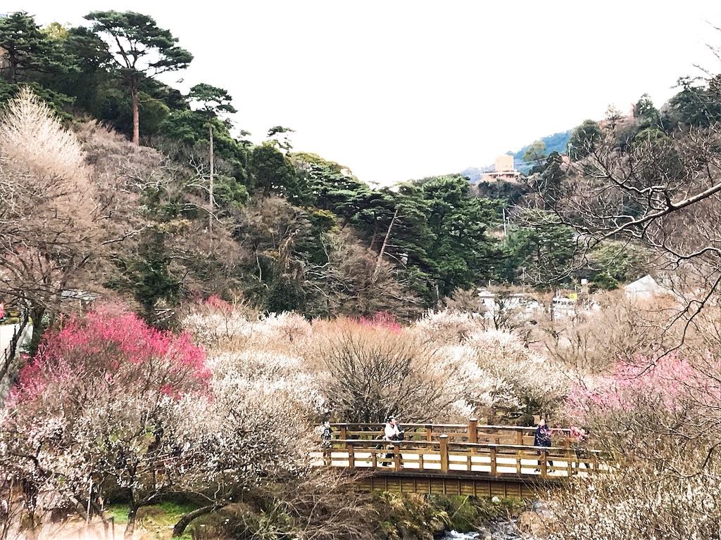 f:id:shiki-japanculture:20190228222936j:image