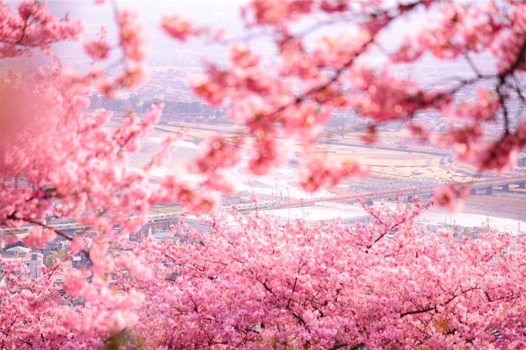 f:id:shiki-japanculture:20190303204746j:image