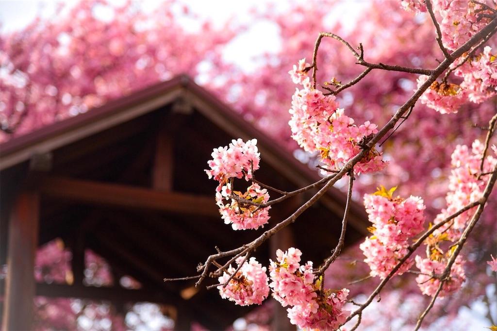 f:id:shiki-japanculture:20190303204810j:image