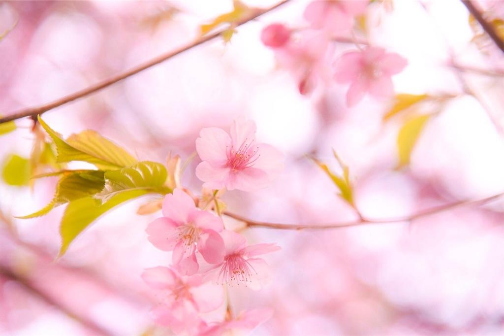 f:id:shiki-japanculture:20190303204814j:image