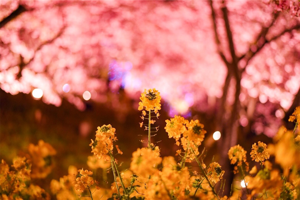 f:id:shiki-japanculture:20190305003039j:image
