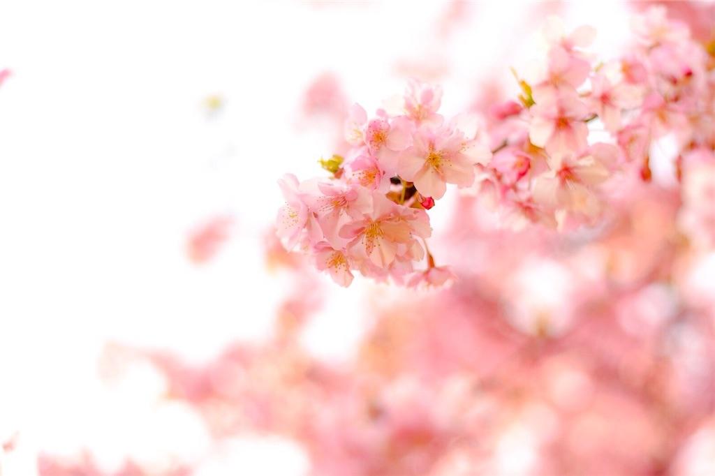 f:id:shiki-japanculture:20190305004755j:image