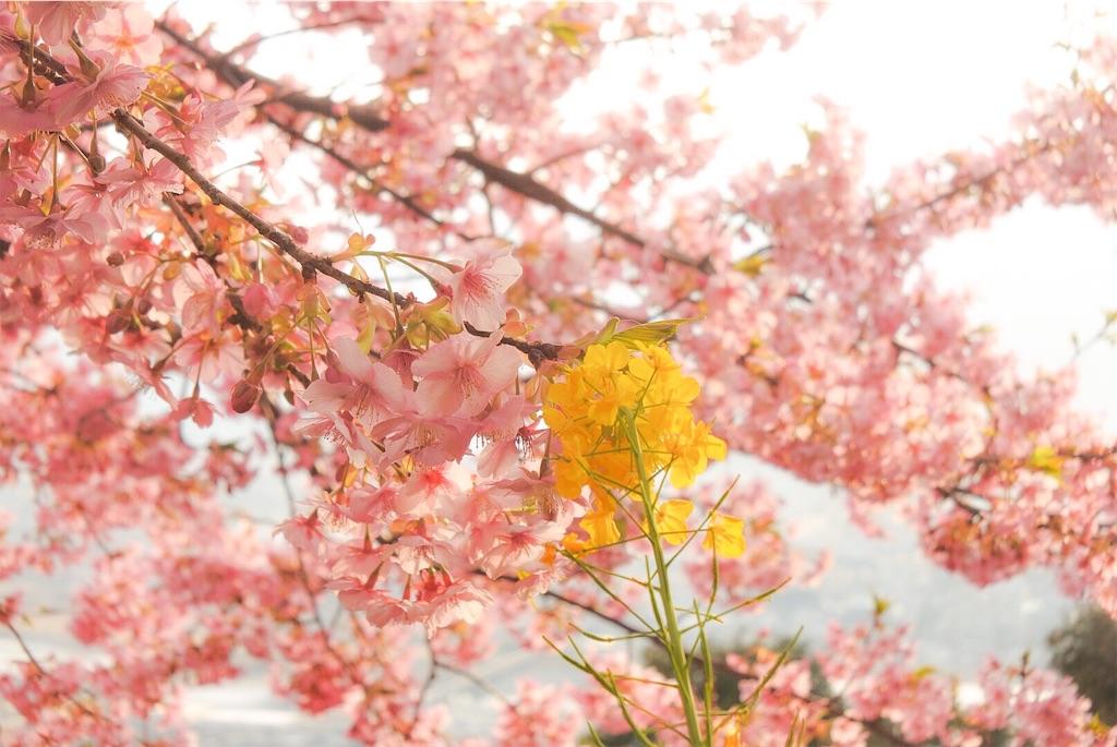 f:id:shiki-japanculture:20190308225420j:image