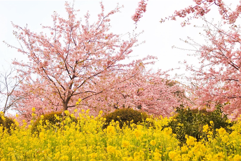 f:id:shiki-japanculture:20190308225806j:image