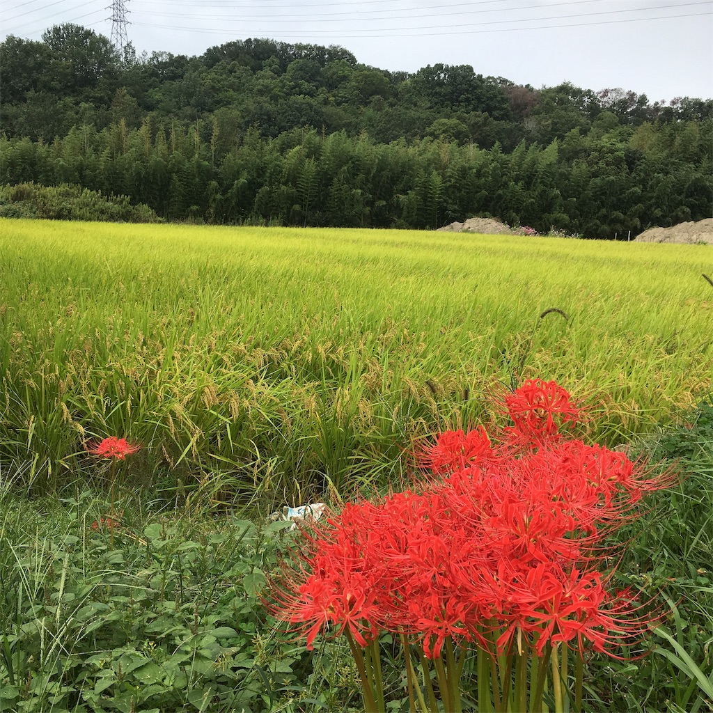 f:id:shima-shimachan:20191009084308j:image
