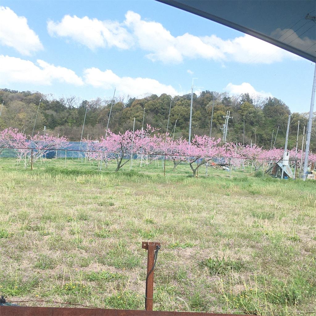 f:id:shima-shimachan:20200523105647j:image