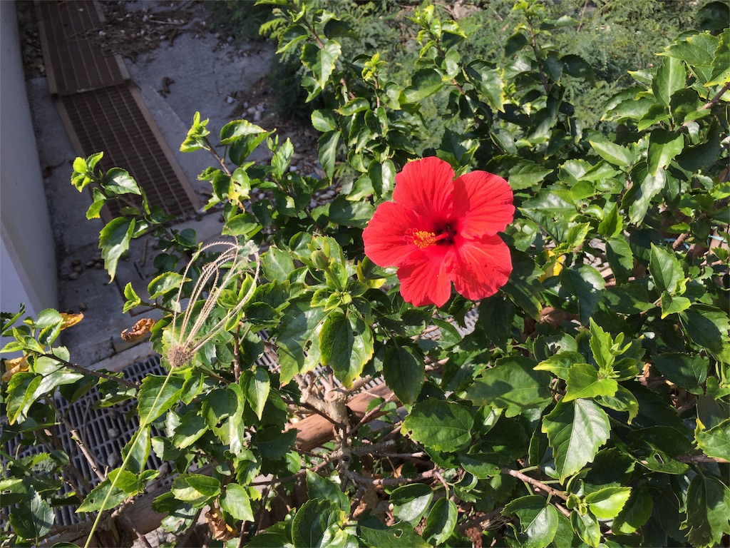 f:id:shima_asari309:20161211155947j:image