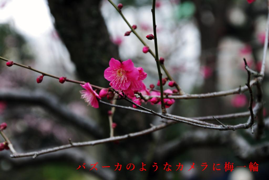 f:id:shima_aya:20170212141613p:plain