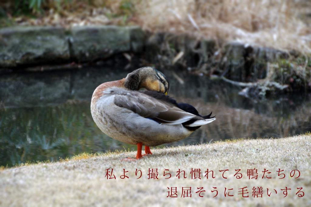 f:id:shima_aya:20170212144454p:plain