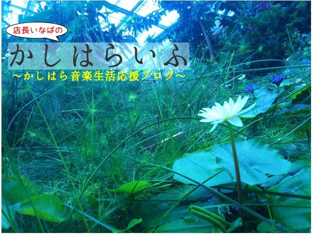 f:id:shima_c_kashihara:20180724111314j:plain