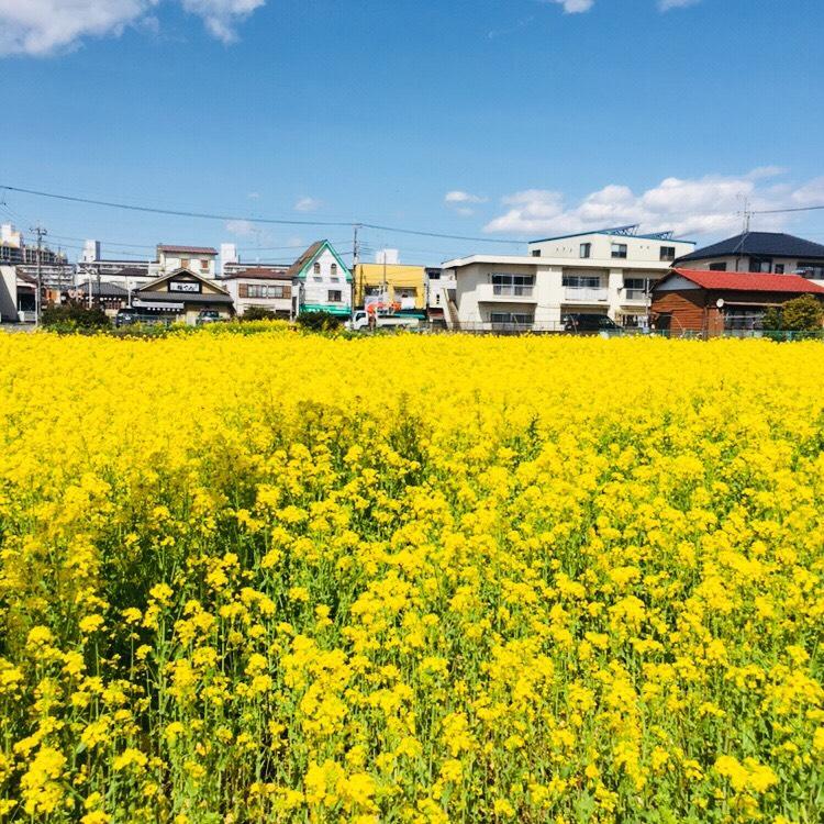 f:id:shima_c_shintokorozawa:20180407205411j:plain