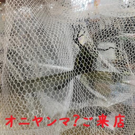 f:id:shima_c_yukari:20170819112126j:plain