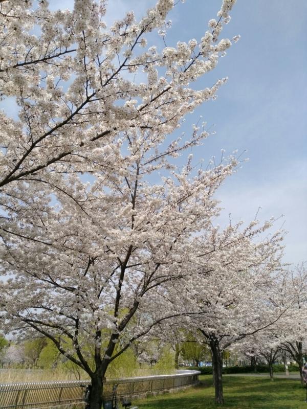 f:id:shimaaaada:20180404231931j:plain