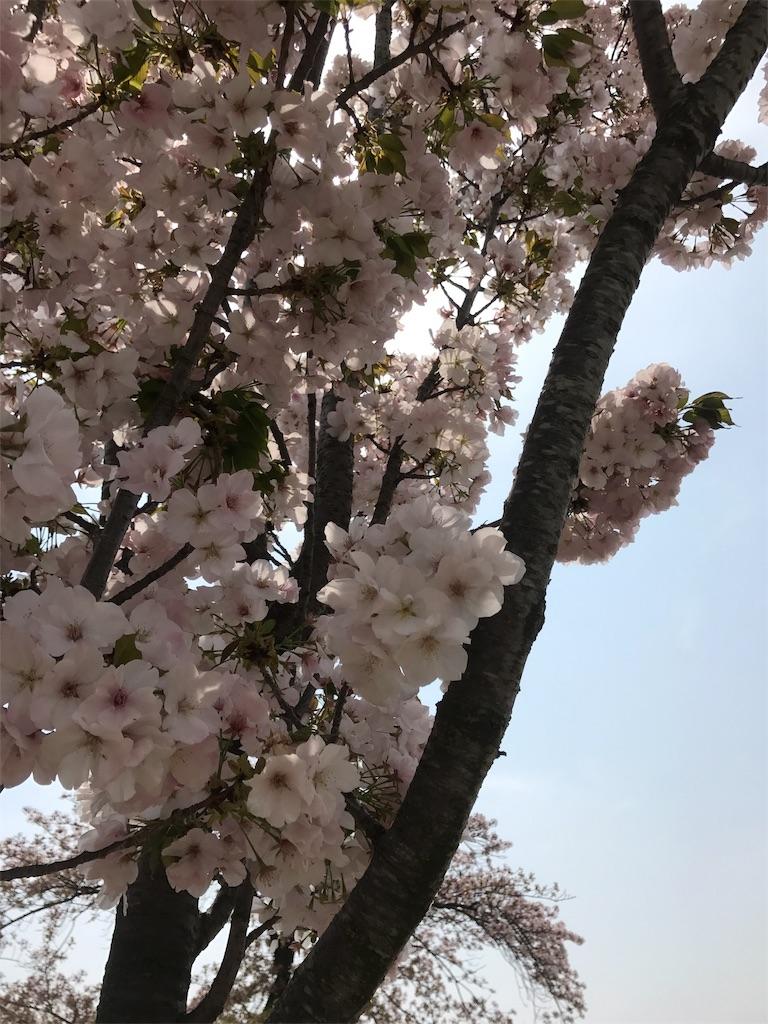 f:id:shimacyu:20180403213957j:image