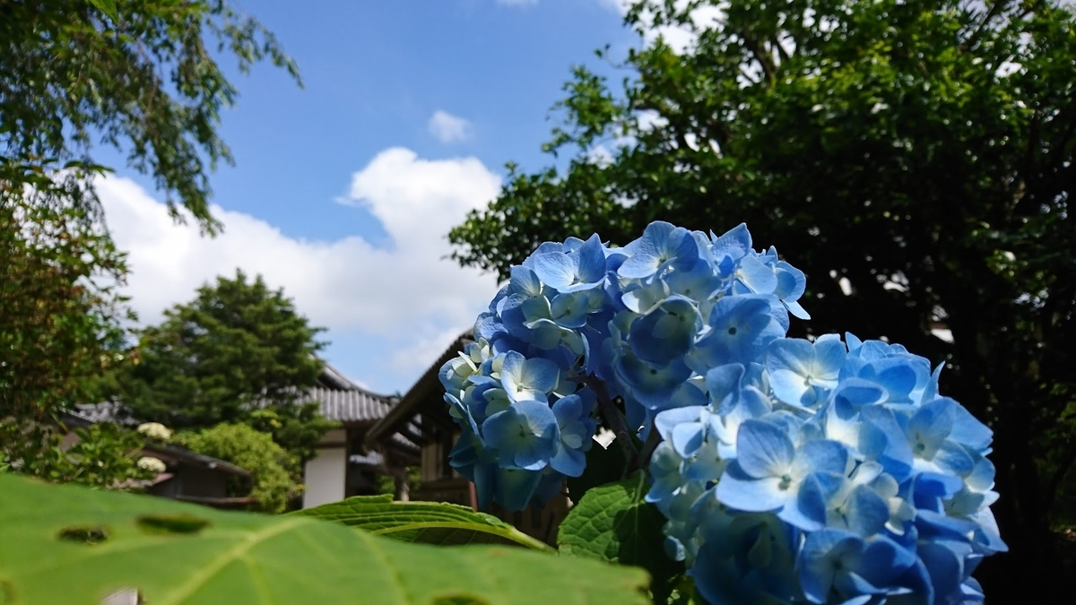 f:id:shimakazu1326:20190612231146j:plain