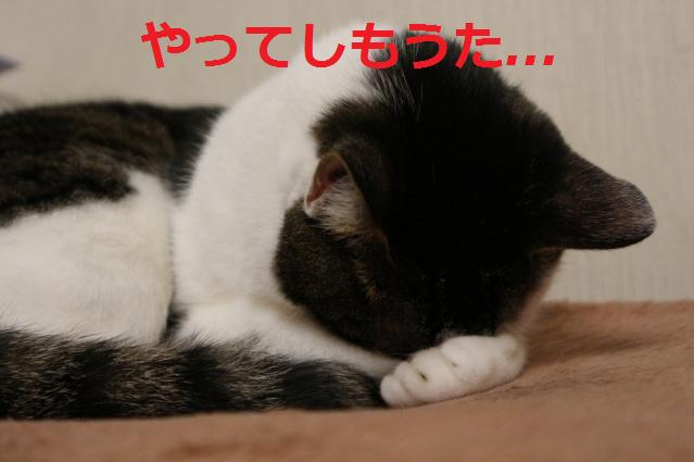 f:id:shimakazu1326:20190730082959p:plain