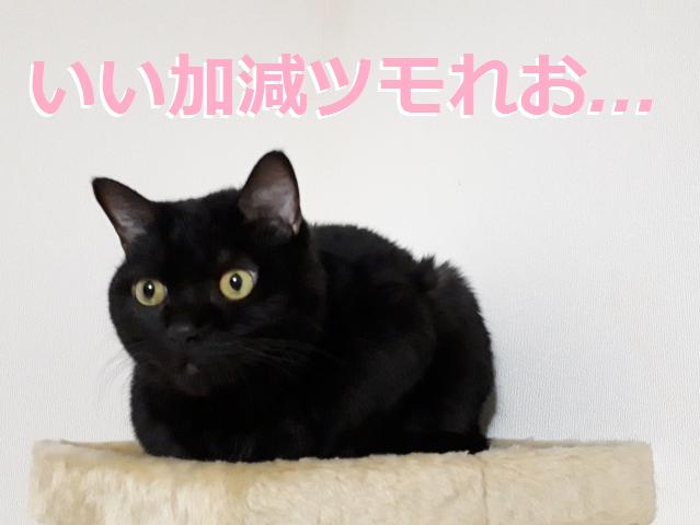 f:id:shimakazu1326:20190816064816p:plain