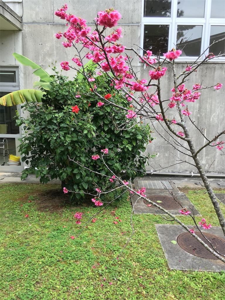 f:id:shimaken9801:20180212124424j:image