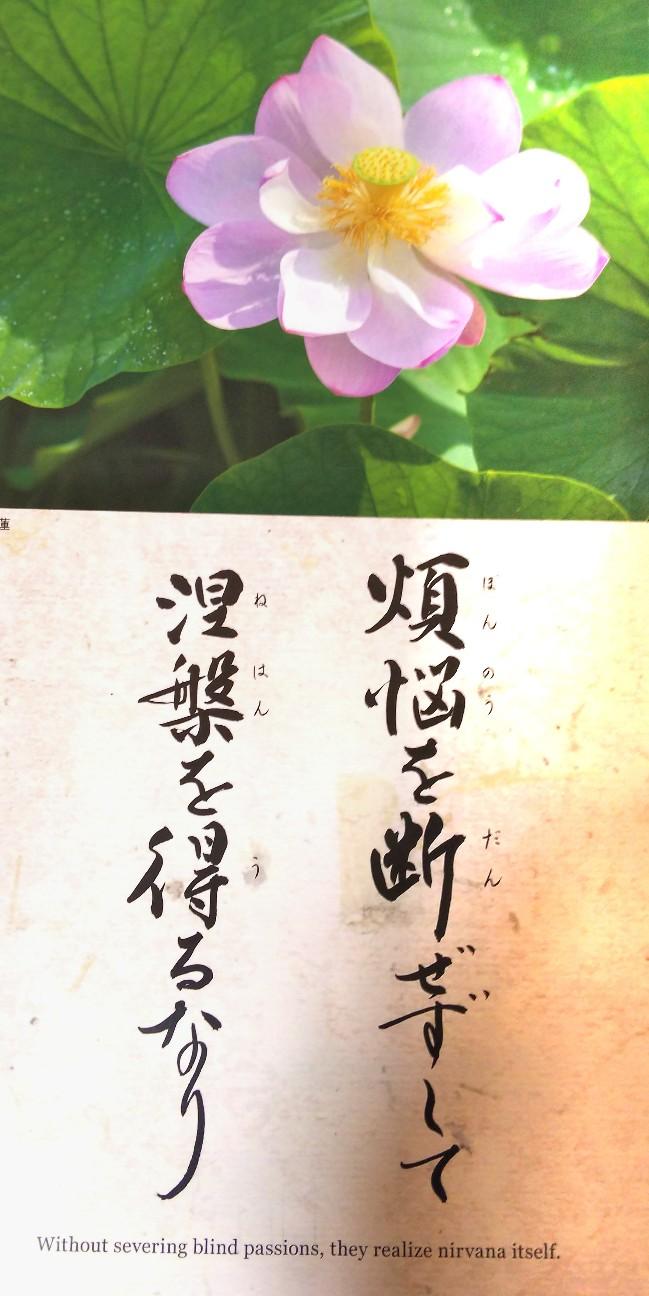 f:id:shimaken9801:20190101061748j:image