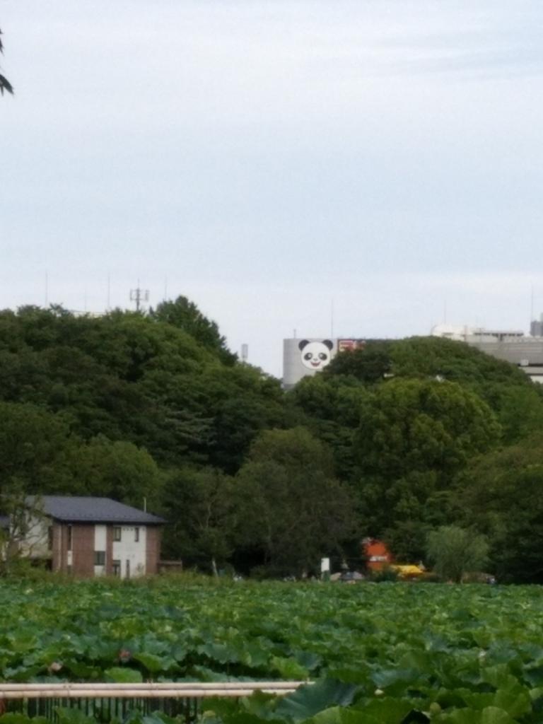 f:id:shimakumasan:20180820021207j:plain