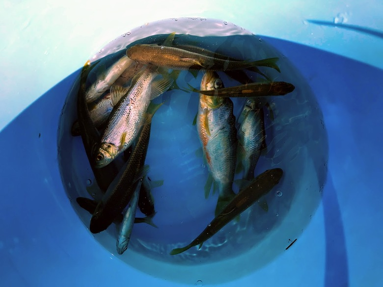 ウナギ 釣り ブッコミ